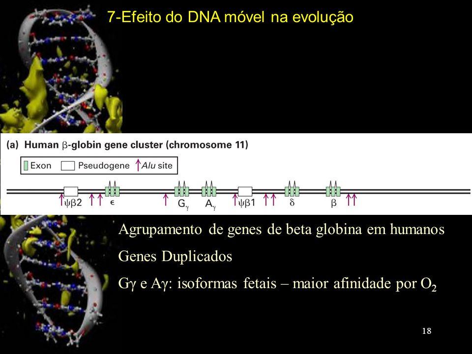 Agrupamento de genes de beta globina em humanos Genes Duplicados Gγ e Aγ: isoformas fetais – maior afinidade por O 2 7-Efeito do DNA móvel na evolução