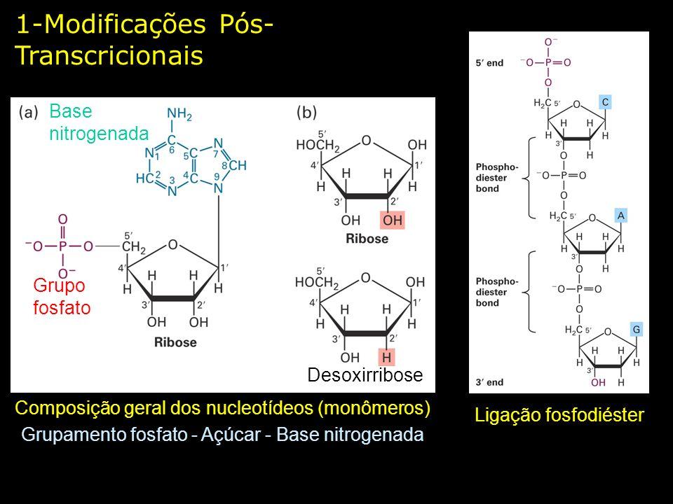 1-Modificações Pós- Transcricionais Composição geral dos nucleotídeos (monômeros) Grupamento fosfato - Açúcar - Base nitrogenada Base nitrogenada Grup