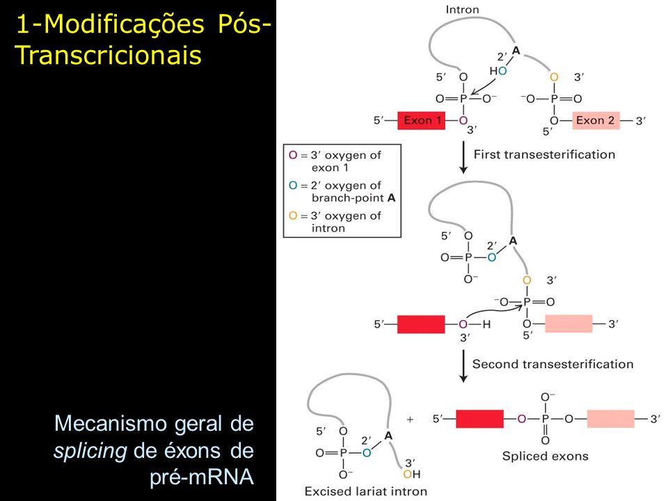 1-Modificações Pós- Transcricionais Mecanismo geral de splicing de éxons de pré-mRNA