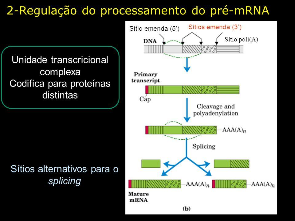 2-Regulação do processamento do pré-mRNA Sítios alternativos para o splicing Unidade transcricional complexa Codifica para proteínas distintas Sítios