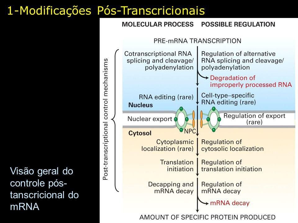 Visão geral do controle pós- tanscricional do mRNA 1-Modificações Pós-Transcricionais
