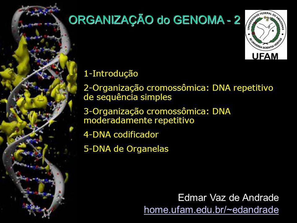 Comparação da organização genômica entre leveduras, mosca das frutas e homem Introns: em verdeÉxons: em azul Região intergênica: linha preta 1-Introdução