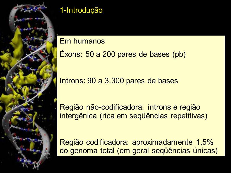 2-Organização cromossômica: DNA repetitivo de sequência simples DNA satélite repetições curtas consecutivas (14-500 pb) em uma região de 20-100 kb de comprimento.