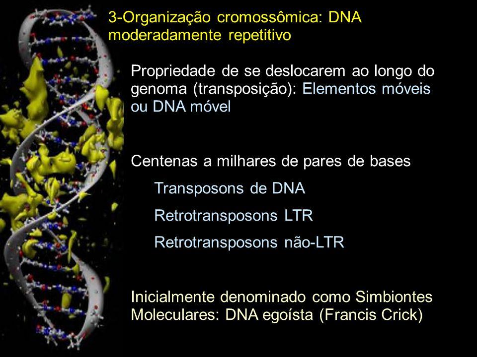 Mecanismo geral de transposição das duas principais classes de elementos móveis 3-Organização cromossômica: DNA moderadamente repetitivo