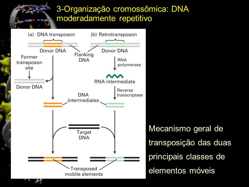 Estrutura geral de uma Seqüência de Inserção (IS) Elemento móvel em bactérias Enzimas necessária para transposição O DNA humano contém cerca de 30 mil cópias de transposons de DNA completos ou incompletos, totalizando 3% do genoma.