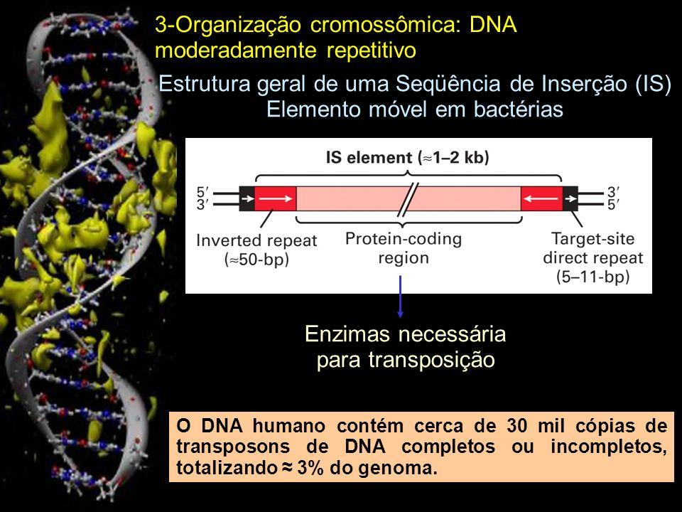Estrutura geral de um retrotransposon LTR (Repetição Terminal Longa) eucariótico Transcriptase reversa, integrase e outras proteínas retrovirais Evolutivamente, no genoma humano retrotransposons LTR derivam de retrovírus endógenos (ERVs).