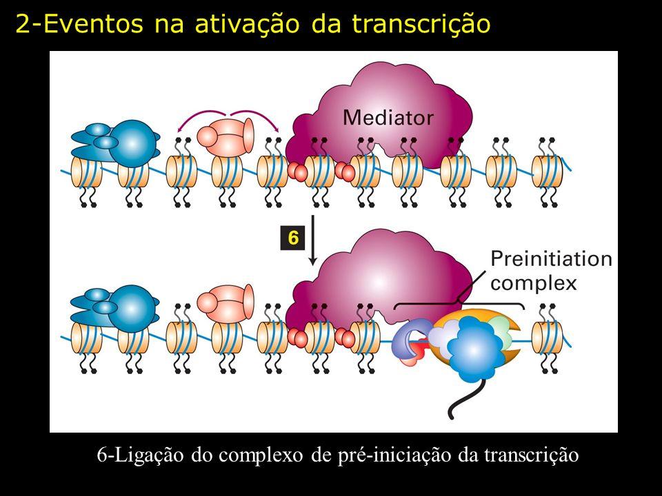 6-Ligação do complexo de pré-iniciação da transcrição 2-Eventos na ativação da transcrição