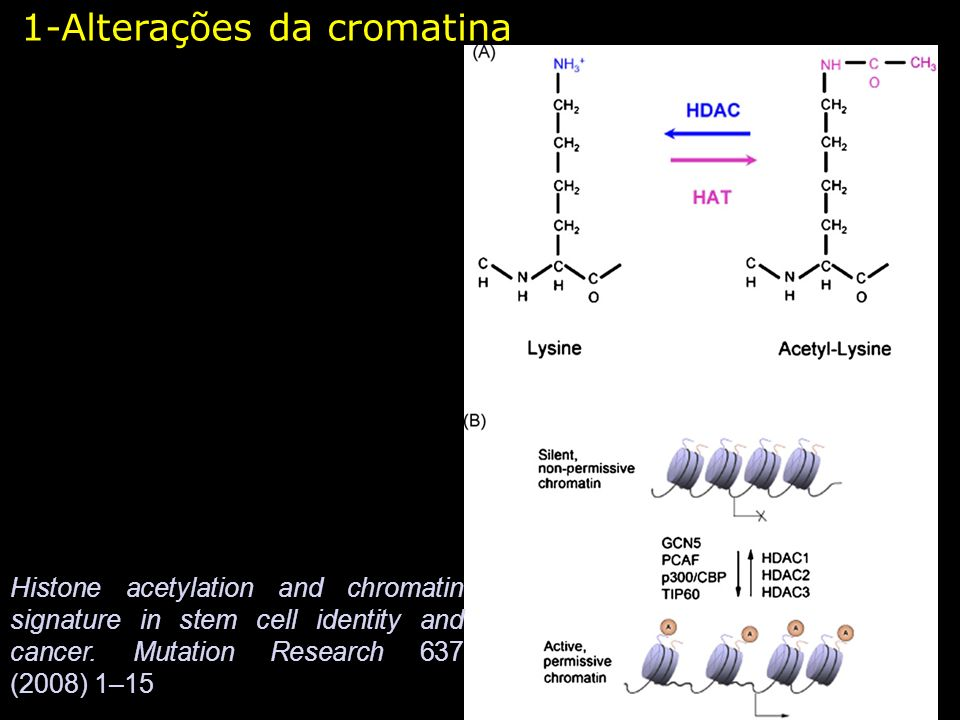 1-Alterações da cromatina Histone acetylation and chromatin signature in stem cell identity and cancer.