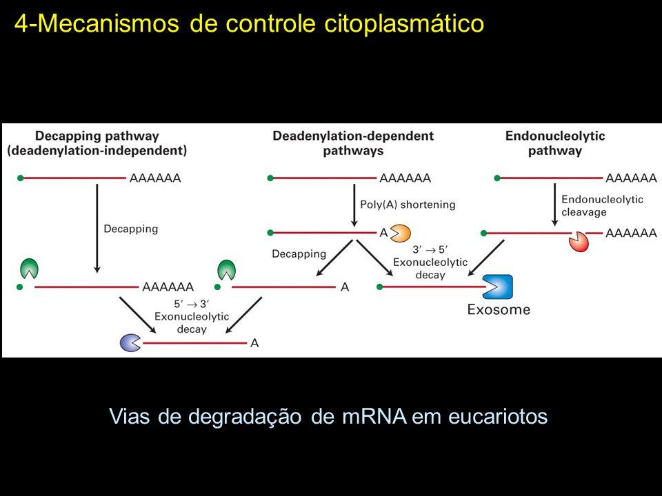 4-Mecanismos de controle citoplasmático Repressão da tradução por miRNA e por RNA de interferência RNA-induced silencing complex Mechanisms of post-transcriptional regulation by microRNAs: are the answers in sight.