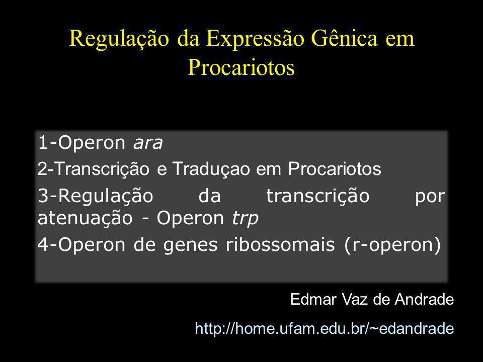 Regulação da Expressão Gênica em Procariotos Edmar Vaz de Andrade http://home.ufam.edu.br/~edandrade 1-Operon ara 2-Transcrição e Traduçao em Procario