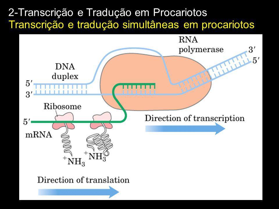 Transcrição e tradução simultâneas em procariotos 2-Transcrição e Tradução em Procariotos