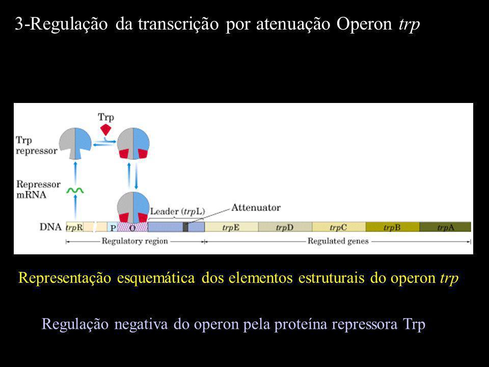 Representação esquemática dos elementos estruturais do operon trp 3-Regulação da transcrição por atenuação Operon trp Regulação negativa do operon pel