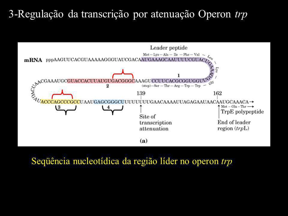 Seqüência nucleotídica da região líder no operon trp 3-Regulação da transcrição por atenuação Operon trp