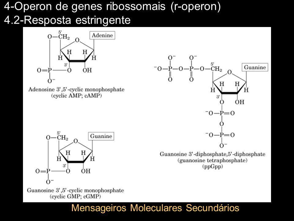 4-Operon de genes ribossomais (r-operon) 4.2-Resposta estringente Mensageiros Moleculares Secundários