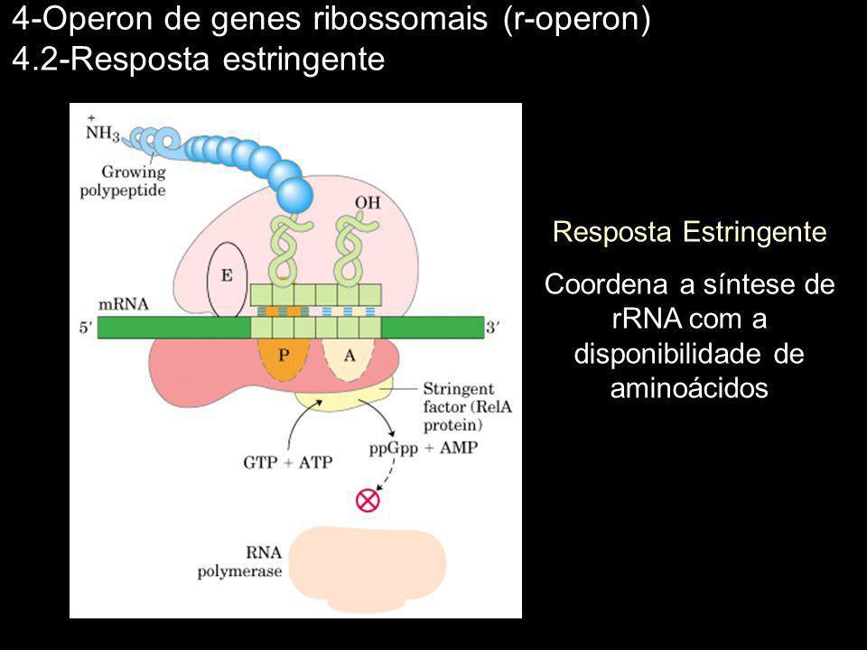 4-Operon de genes ribossomais (r-operon) 4.2-Resposta estringente Resposta Estringente Coordena a síntese de rRNA com a disponibilidade de aminoácidos