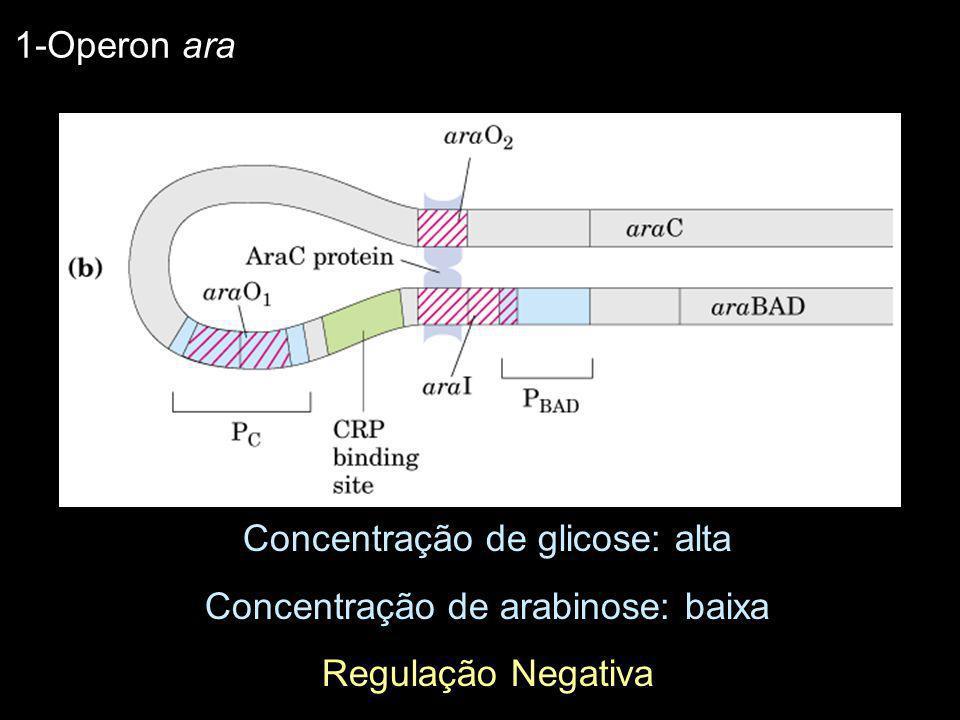 Concentração de glicose: alta Concentração de arabinose: baixa Regulação Negativa 1-Operon ara
