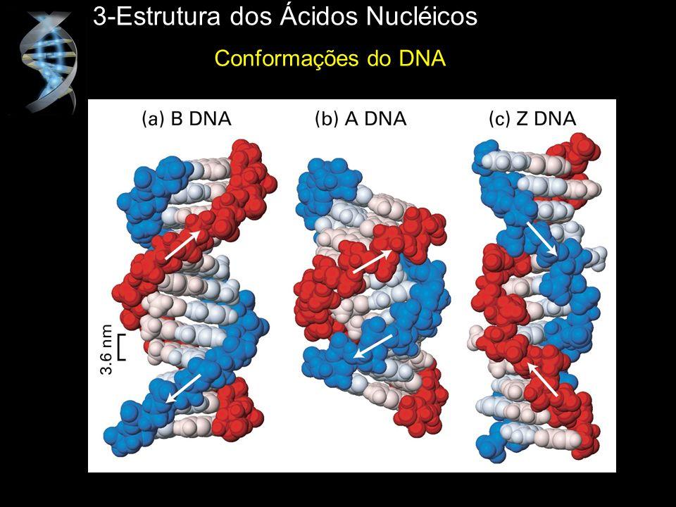 3-Estrutura dos Ácidos Nucléicos Conformações do DNA