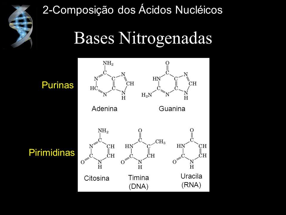 Bases Nitrogenadas Adenina Guanina Purinas Pirimidinas Citosina Timina (DNA) Uracila (RNA) 2-Composição dos Ácidos Nucléicos