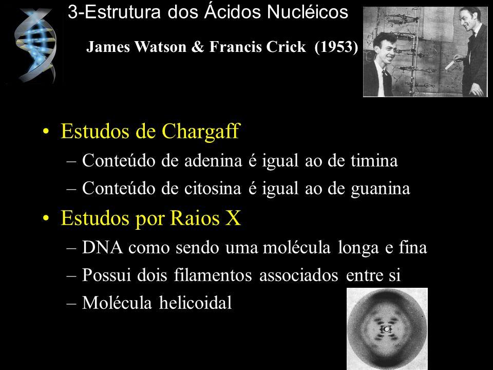 Estudos de Chargaff –Conteúdo de adenina é igual ao de timina –Conteúdo de citosina é igual ao de guanina Estudos por Raios X –DNA como sendo uma molé