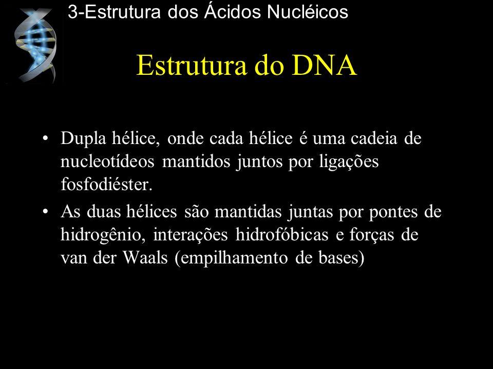 Estrutura do DNA Dupla hélice, onde cada hélice é uma cadeia de nucleotídeos mantidos juntos por ligações fosfodiéster. As duas hélices são mantidas j