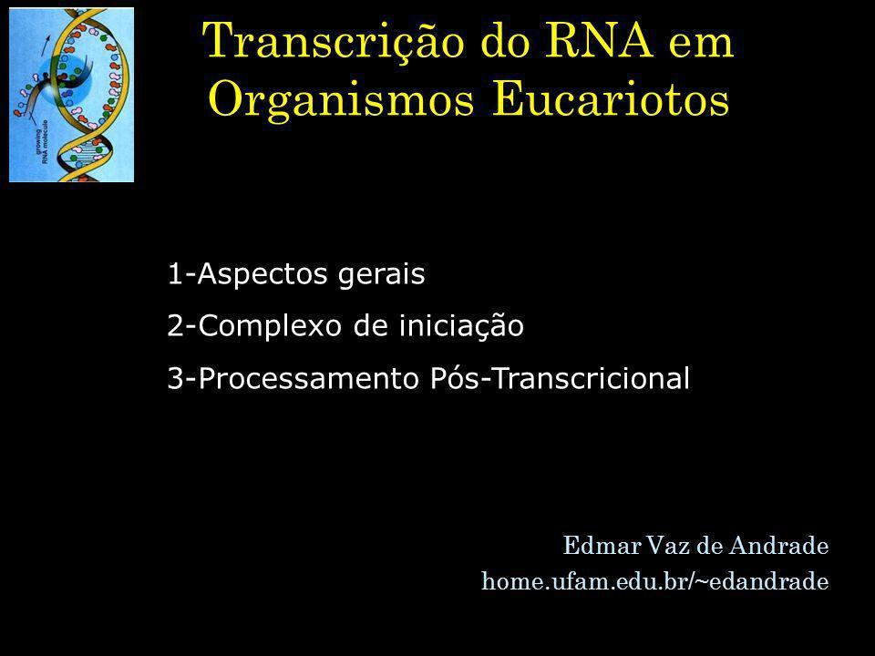 1-Aspectos gerais RNA polimerase I –Transcrição de rRNA RNA polimerase II –Transcrição de mRNA RNA polimerase III –Transcrição de tRNA, rRNA e RNAs reguladores Tipos de RNA polimerase em eucariotos
