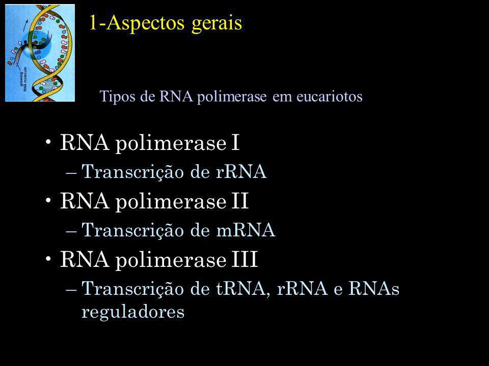 1-Aspectos gerais RNA polimerase I –Transcrição de rRNA RNA polimerase II –Transcrição de mRNA RNA polimerase III –Transcrição de tRNA, rRNA e RNAs re