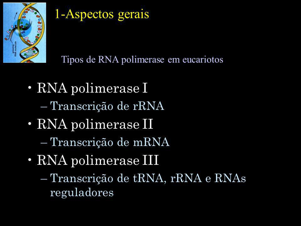 Promotores reconhecidos pela RNA polimerase II de eucariotos.