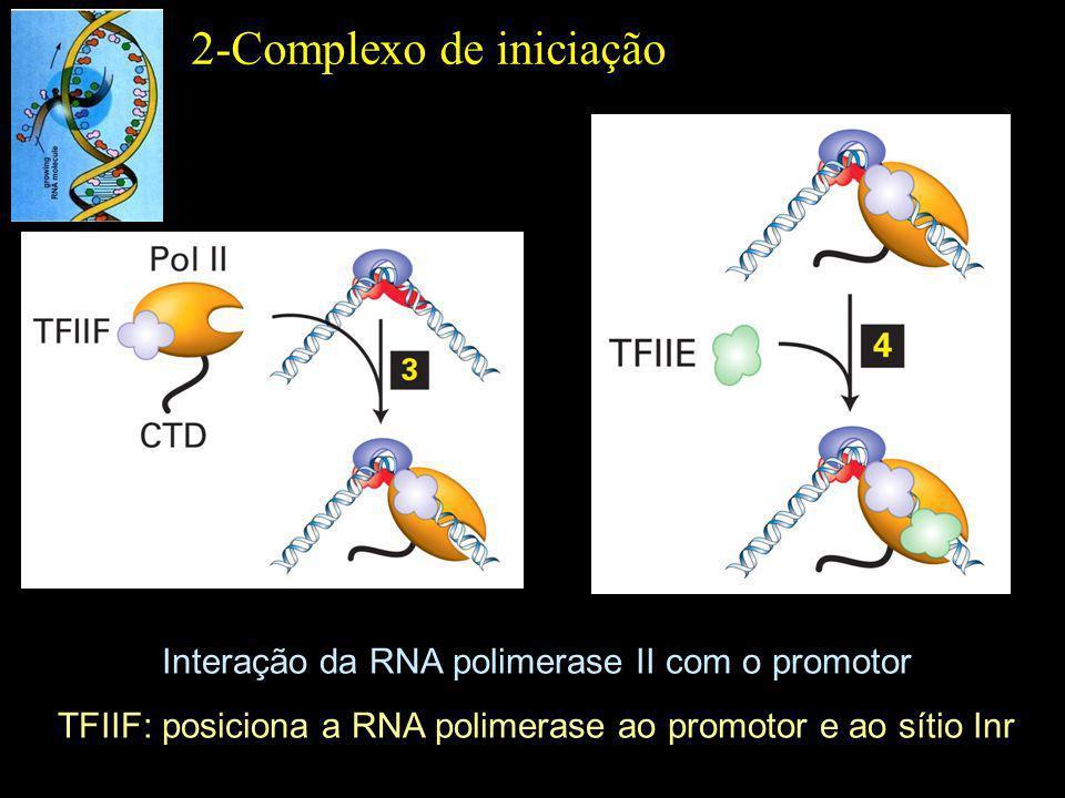 TFIIH Helicase e fosforilação do domínio C-terminal de RNA Pol II Conclusão da etapa de iniciação 2-Complexo de iniciação TFIIE: Sítio de ancoragem para TFIIH