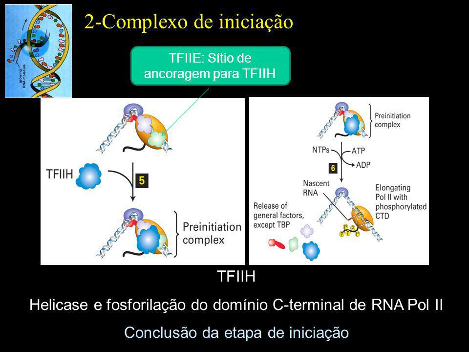 TFIIH Helicase e fosforilação do domínio C-terminal de RNA Pol II Conclusão da etapa de iniciação 2-Complexo de iniciação TFIIE: Sítio de ancoragem pa