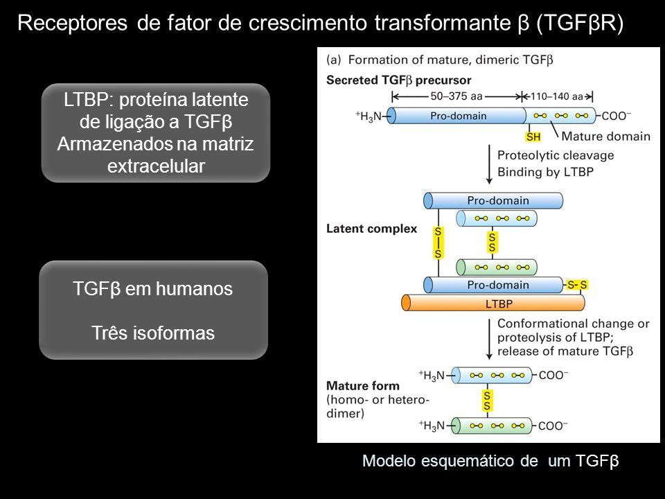 Receptores de fator de crescimento transformante β (TGFβR) Modelo esquemático de um TGFβ LTBP: proteína latente de ligação a TGFβ Armazenados na matri