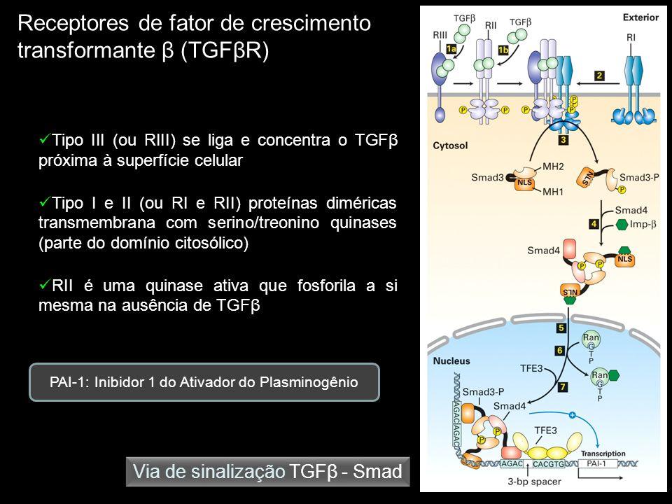 Receptores de fator de crescimento transformante β (TGFβR) Via de sinalização TGFβ - Smad Tipo III (ou RIII) se liga e concentra o TGFβ próxima à supe