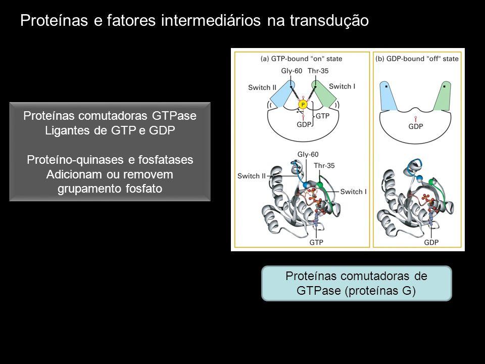 Proteínas comutadoras de GTPase (proteínas G) Proteínas comutadoras GTPase Ligantes de GTP e GDP Proteíno-quinases e fosfatases Adicionam ou removem g