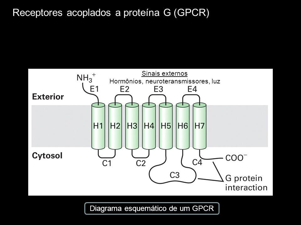 Receptores acoplados a proteína G (GPCR) Diagrama esquemático de um GPCR Sinais externos Hormônios, neuroteransmissores, luz
