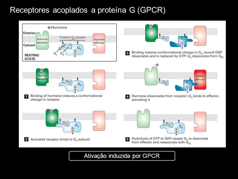 Receptores acoplados a proteína G (GPCR) Ativação do fator de transcrição Tubby induzida por GPCR Gene tubby Expressos em células do cérebro em áreas relacionadas com o controle alimentar (gene mutante: obesidade) Gene tubby Expressos em células do cérebro em áreas relacionadas com o controle alimentar (gene mutante: obesidade) PIP2: fosfoinositídeo fosfato DAG: 1,2-diacilglicerol IP3: inositol 1, 4, 5-trifosfato