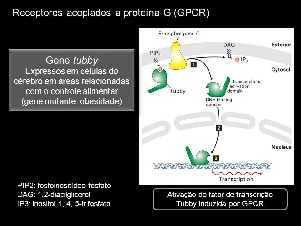 Receptores acoplados a proteína G (GPCR) Ativação do fator de transcrição Tubby induzida por GPCR Gene tubby Expressos em células do cérebro em áreas