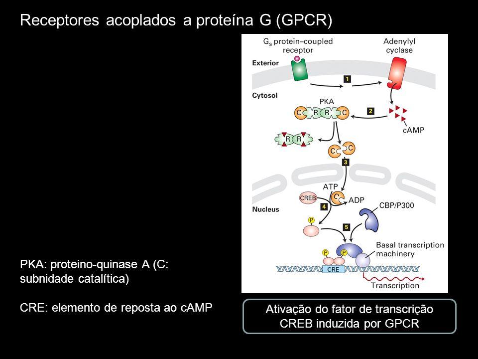 Receptores acoplados a proteína G (GPCR) Ativação do fator de transcrição CREB induzida por GPCR PKA: proteino-quinase A (C: subnidade catalítica) CRE