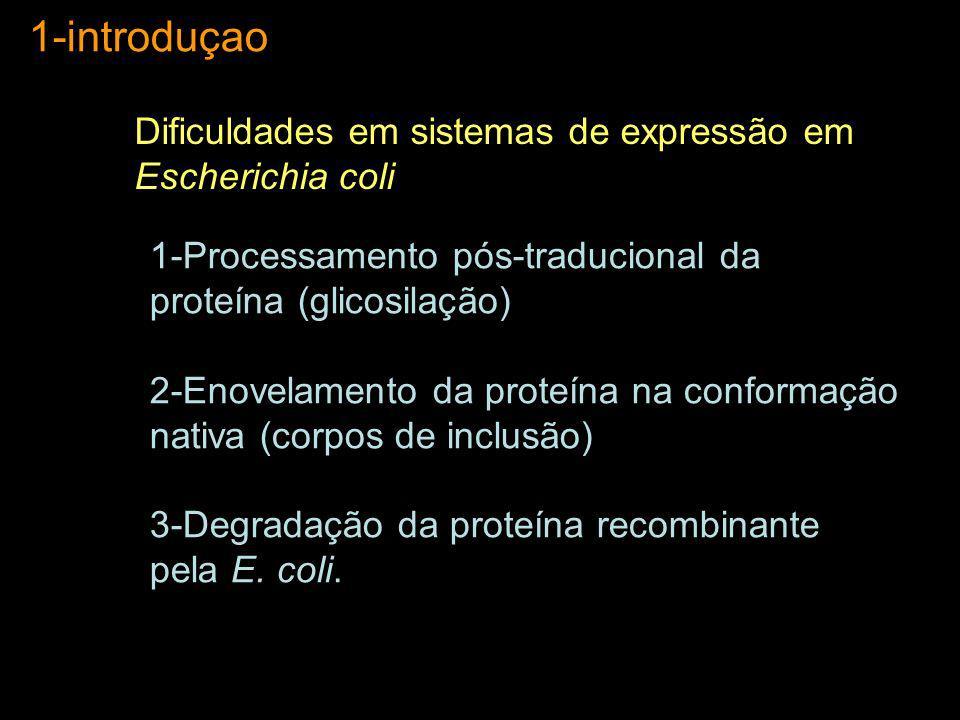 1-introduçao 1-Processamento pós-traducional da proteína (glicosilação) 2-Enovelamento da proteína na conformação nativa (corpos de inclusão) 3-Degrad