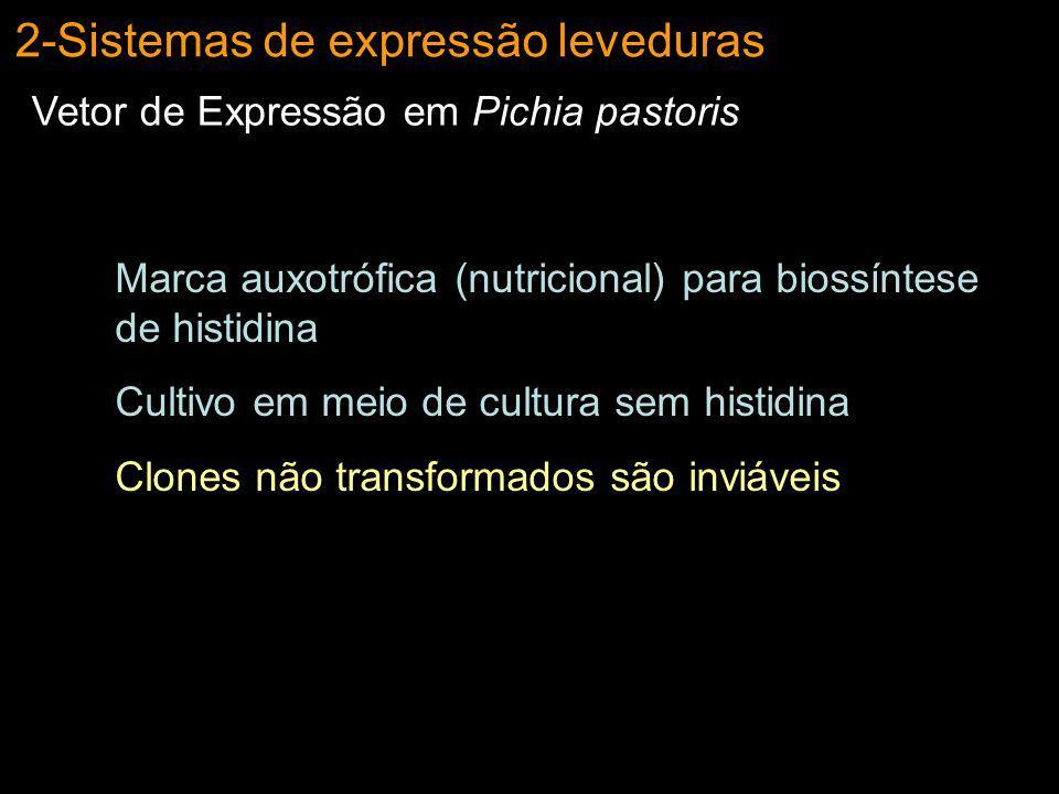 2-Sistemas de expressão leveduras Vetor de Expressão em Pichia pastoris Marca auxotrófica (nutricional) para biossíntese de histidina Cultivo em meio