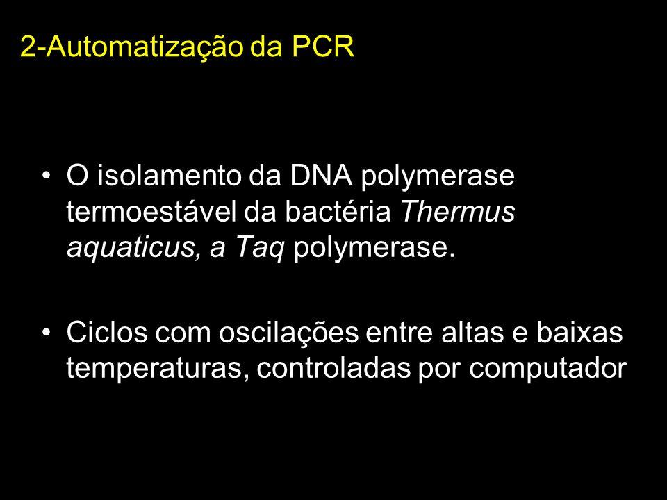 2-Automatização da PCR O isolamento da DNA polymerase termoestável da bactéria Thermus aquaticus, a Taq polymerase. Ciclos com oscilações entre altas