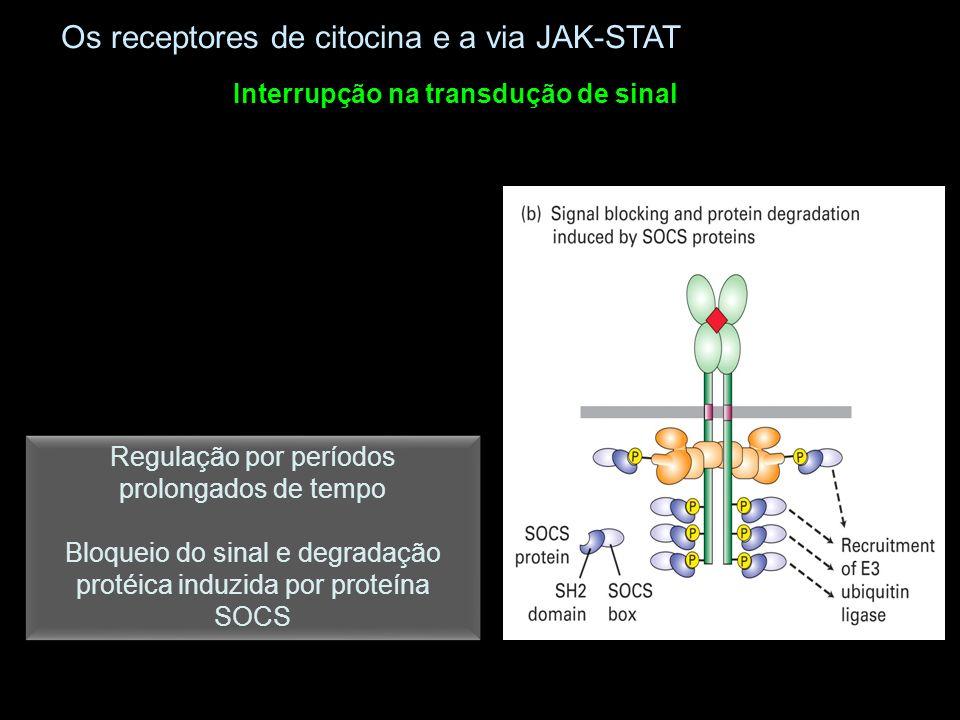 Regulação por períodos prolongados de tempo Bloqueio do sinal e degradação protéica induzida por proteína SOCS Regulação por períodos prolongados de t