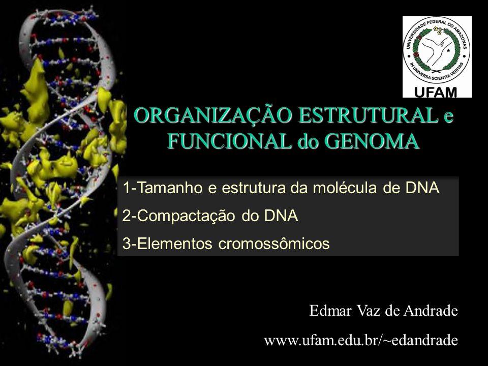 ORGANIZAÇÃO ESTRUTURAL e FUNCIONAL do GENOMA Edmar Vaz de Andrade www.ufam.edu.br/~edandrade 1-Tamanho e estrutura da molécula de DNA 2-Compactação do