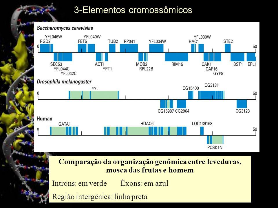 Comparação da organização genômica entre leveduras, mosca das frutas e homem Introns: em verdeÉxons: em azul Região intergênica: linha preta 3-Element
