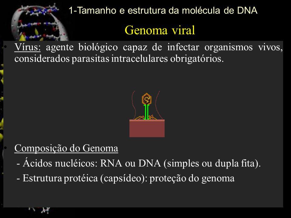 Genoma viral Vírus: agente biológico capaz de infectar organismos vivos, considerados parasitas intracelulares obrigatórios. Composição do Genoma - Ác