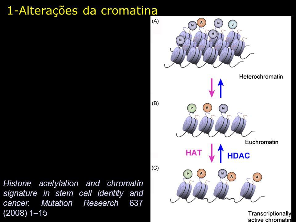 Deacetilação de histonas por ação de proteínas repressoras de transcrição Complexo Multiprotéico Co-Repressor 1-Alterações da cromatina