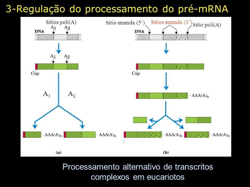 3-Regulação do processamento do pré-mRNA Processamento alternativo de transcritos complexos em eucariotos Sítios poli(A) Sítio poli(A) Sítios emenda (