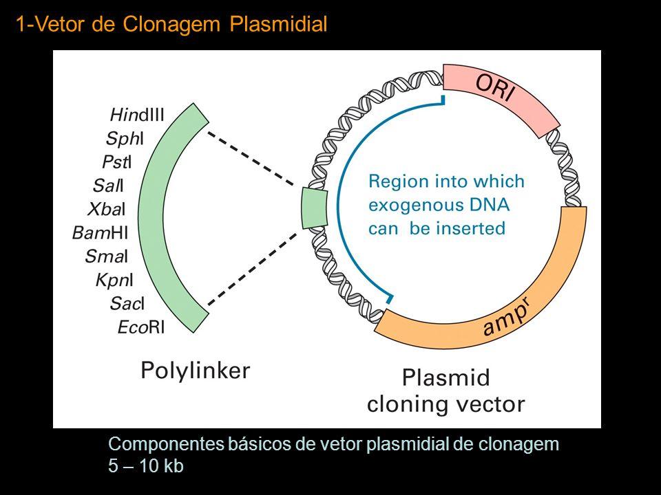 1-Vetor de Clonagem Plasmidial Componentes básicos de vetor plasmidial de clonagem 5 – 10 kb