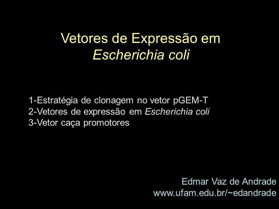 Vetores de Expressão em Escherichia coli 1-Estratégia de clonagem no vetor pGEM-T 2-Vetores de expressão em Escherichia coli 3-Vetor caça promotores E