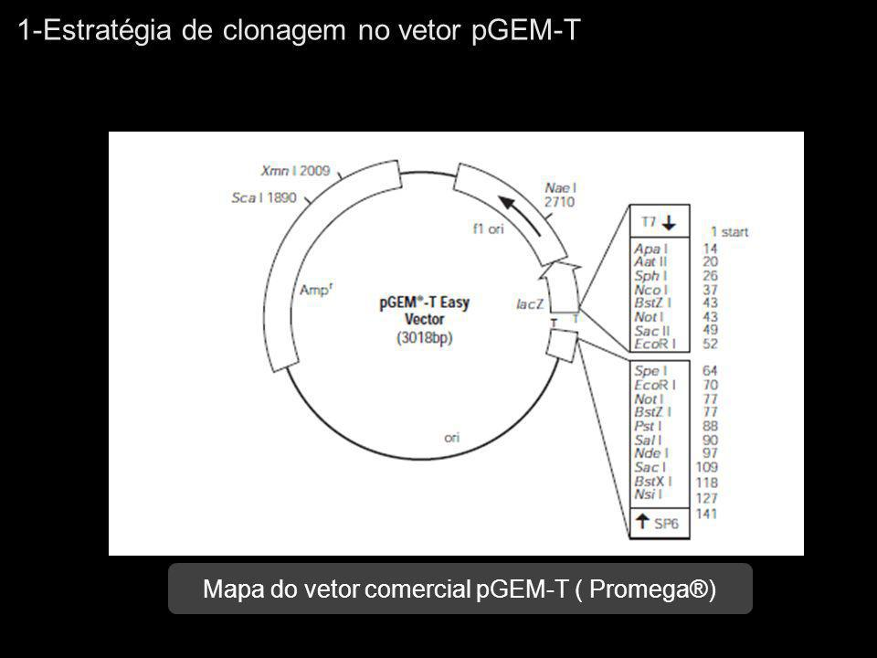 2-Vetores de expressão em Escherichia coli Principais componentes estruturais de um vetor de expressão em E.