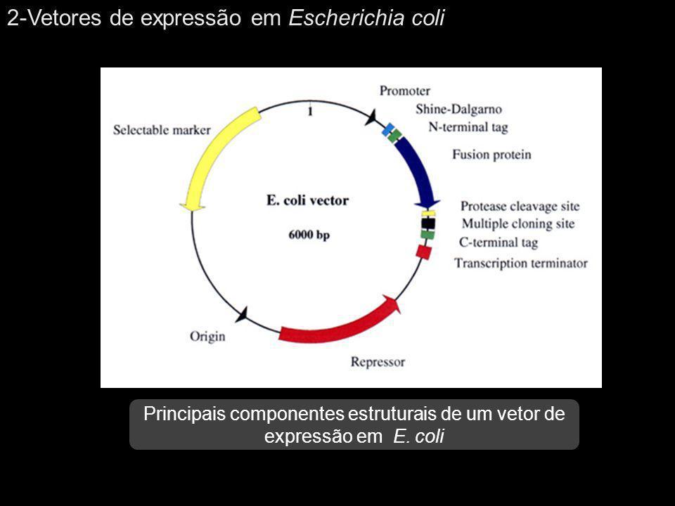 2-Vetores de expressão em Escherichia coli Principais componentes estruturais de um vetor de expressão em E. coli