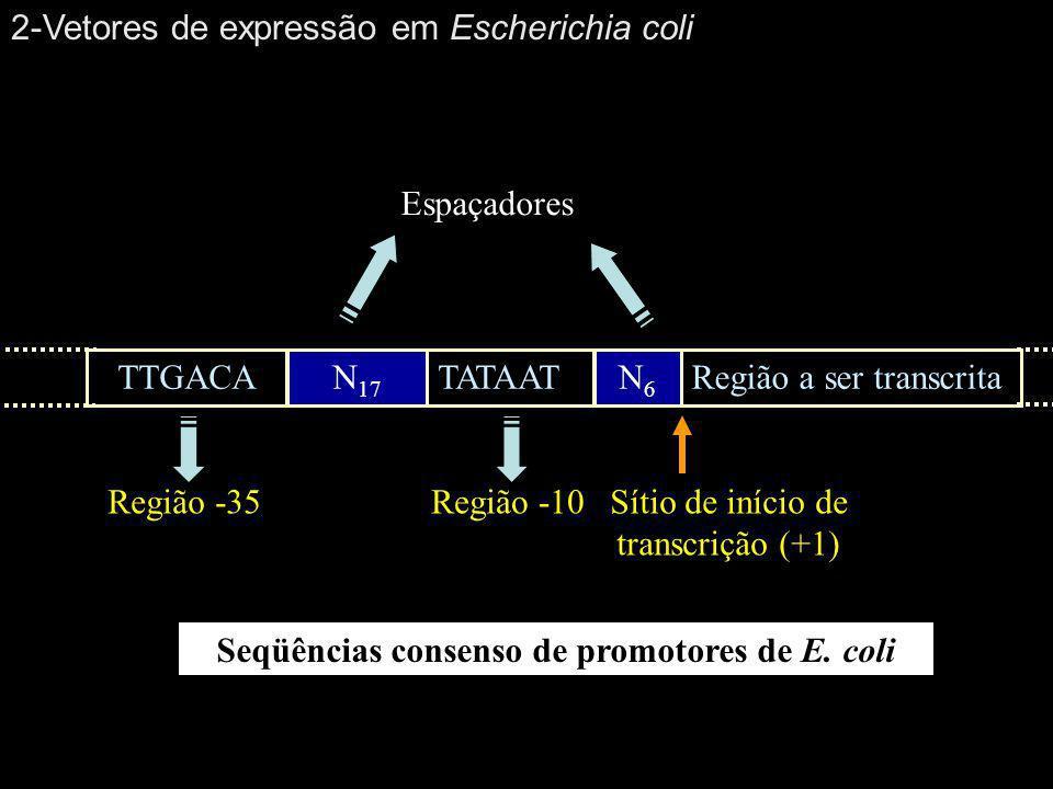 Seqüências consenso de promotores de E. coli Região -35 TTGACAN 17 TATAATN6N6 Região a ser transcrita Região -10 Espaçadores Sítio de início de transc